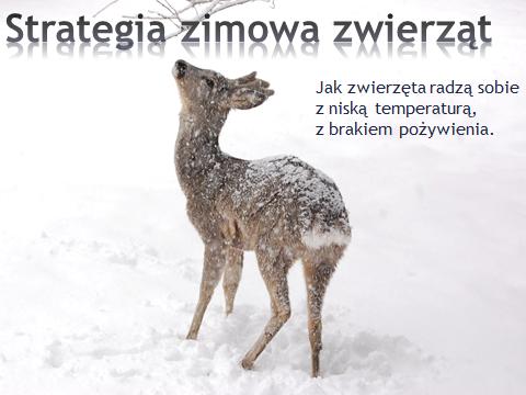 jak-zwierzeta-zimuja.png