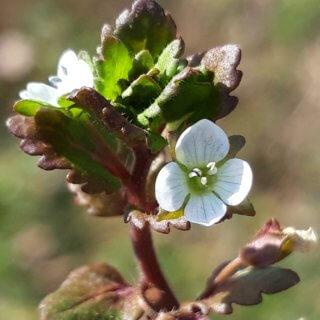 Wiosna roztacza swoje uroki już od ponad dwóch tygodni
