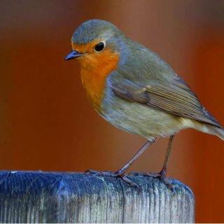 Wiosenne głosy ptaków