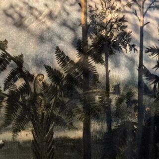 Wędrówka po karbońskim lesie